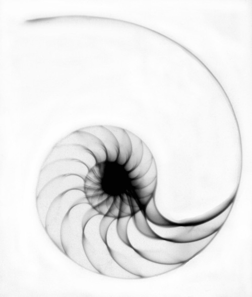 x - RAY PHOTO / Nautilus / נאוטיליוס / ναυτίλος