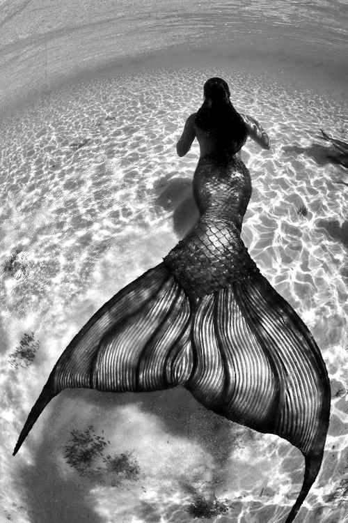 בת הים  - אגדה או מציאות???