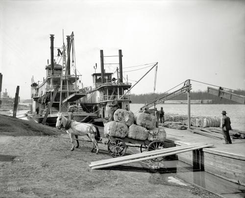 "1910 | Vicksburg , Mississippi . ""Unloading cotton at the levee"""