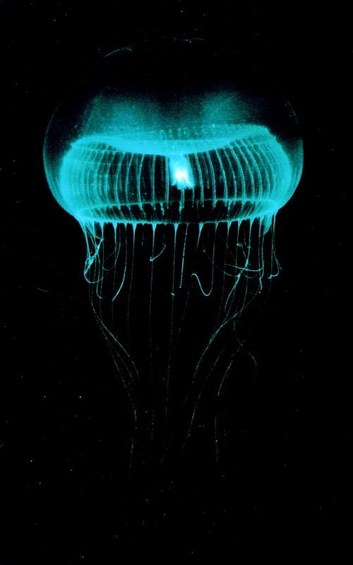 אור בטבע - ביולומינסנציה - אוֹרוּת בִּיּוֹלוֹגִית - Bioluminescence